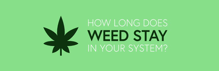 How Long Does Weed Stay in Your System? - ADT Healthcare