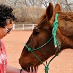 What is Equine Therapy and Does it Work for Addiction?
